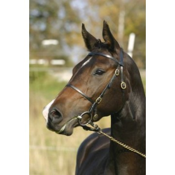 Wahlsten W-show bridle