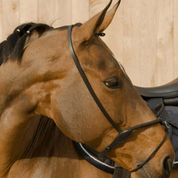 Lami-Cell rope noseband