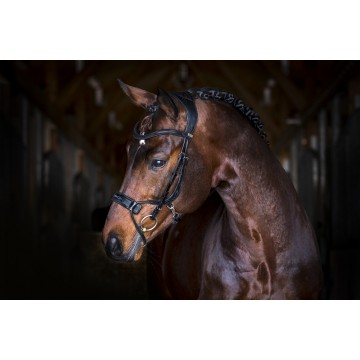 PS of Sweden High Jump Revolution Bridles